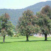 Tödliche Bakterien bedrohen Obstkulturen