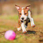Illegale Verkäufe von kranken Hundewelpen