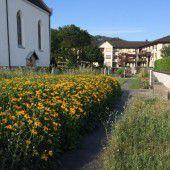 Unmut über Wildwuchs auf dem Gaißauer Friedhof