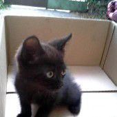 Katze als blinder Passagier
