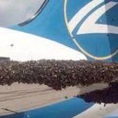 Bienen stoppen Flugzeug
