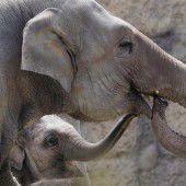 Elefanten-Geschwister in Zürich