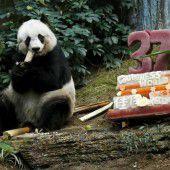 Geburtstag des ältesten Pandas