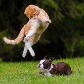 Was Minki darf, darf Arco in seinem Hundeleben nicht