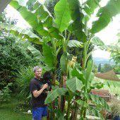 Ein Paradies, nicht nur für Bananen