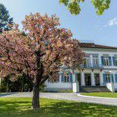 Ein Kirschbaum blüht vor dem Künstlerhaus