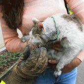 Sauerstoff für gerettete Katze