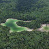 Klimawandel bedroht nördliche Nadelwälder