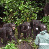 Frühere Labor-Affen brauchen dringend Hilfe