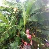 Urlaubsstimmung in Omis und Opis Garten