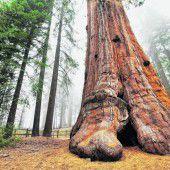 Riesenbäume, Canyons und Wüsten