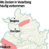 Zecken erobern größere Gebiete in Vorarlberg