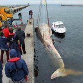 Polnische Forscher suchen Kühlhallen für toten Finnwal
