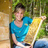 4,5 Tonnen Honig: Tolle Leistungsbilanz der Bienen