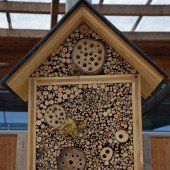 Insektenhotels für den eigenen Garten bauen