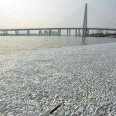 Tausende tote Fische in Tianjin angeschwemmt