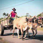 Ochsenkarren auf der Straße