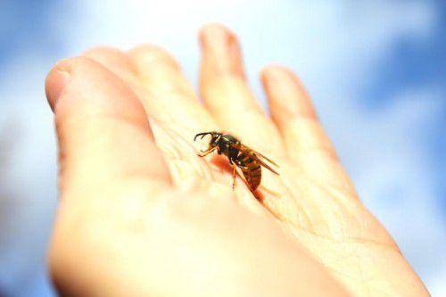 So harmlos wie auf diesem Bild sind Wespen leider nicht immer.