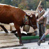 Konflikt um Kuhglocken in Bayern entbrannt