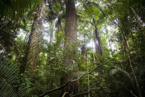 Die Forscher bestimmten, wie sich die Abholzung seit dem Jahr 1900 auf die Bestände der Baumarten ausgewirkt hat.
