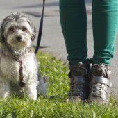 Test für Hund und Halter
