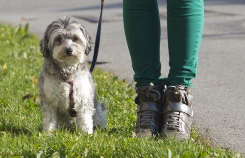 Auch kleine Hunde müssen folgen können.