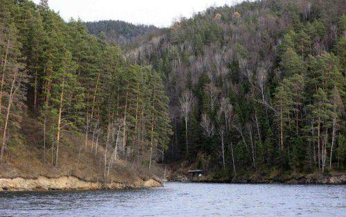 Die höchste Baumdichte gibt es in den nördlichen Wäldern der subarktischen Regionen von Russland, Skandinavien und Nordamerika.
