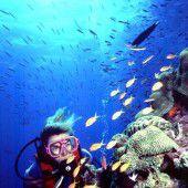 Korallenriff ist stark bedroht