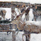 Das Wildproblem im Klostertal und Silbertal