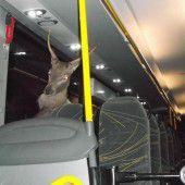 Wildunfall in Kärnten: Hirsch landet in Bus