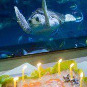Schildkröte hat 50. Geburtstag