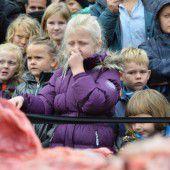 Zoo seziert einen Löwen vor Augen von Kindern