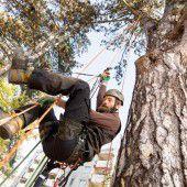Kletterprofis und ihre Arbeit auf Blattriesen