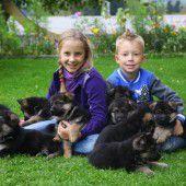 Eine süße Rasselbande zum Welthundetag