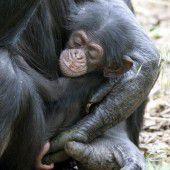 Verwaistes Affenbaby adoptiert