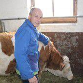 Rätsel um verschwundene Kuh