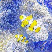 Korallenriffe an der Westküste