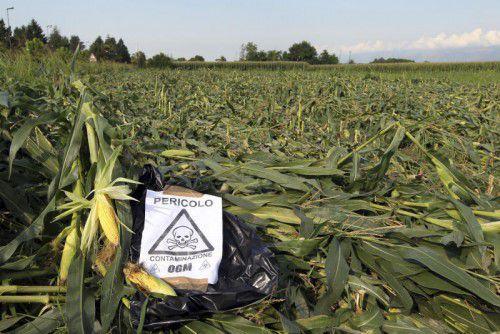 Pestizide, Blei oder Quecksilber: Eine neue Studie beschreibt nun die gravierendsten Schadstoffe.