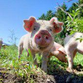 Weniger Bürokratie bei Tierschutz