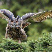 Ein Vogel, der seinen Namen ruft