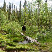 Lappland: Die letzte Wildnis in Europa