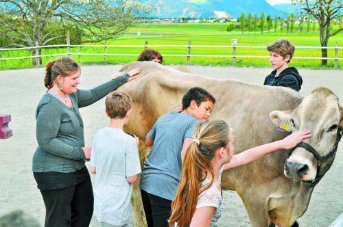 Auf Kühen zu reiten, mit Schafen spazieren zu gehen und vieles mehr erwartet die Jugendlichen bei einem TGI-Nachmittag auf dem Bauernhof der Familie Borg in Beschling.