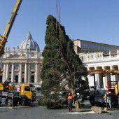 Christbaum für den Vatikan