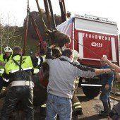 Weiler: Kuh stürzte in Jauchegrube