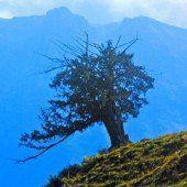 Baumwelten erschließen