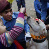 Gläubige Hindus verehren in Nepal ihre Hunde