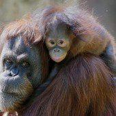 Keju hat eine Pflegemutter