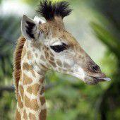 Fototermin im Singapur Zoo