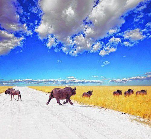 In den Nationalparks von Namibia kann man die Big Five finden.