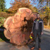 Mammutbaum in Götzis gefällt